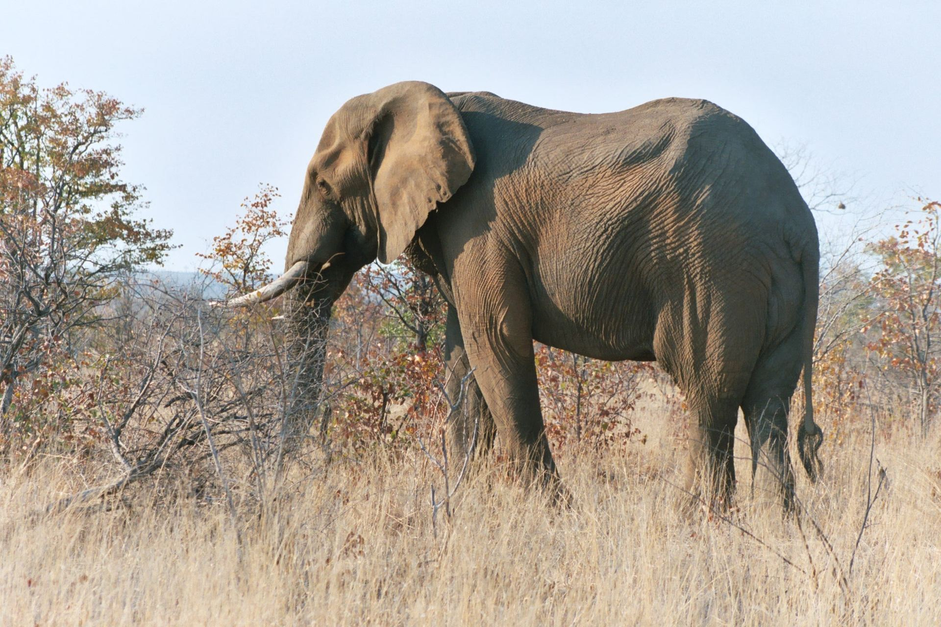 ponto de interesse – reserva de elefantes_rd